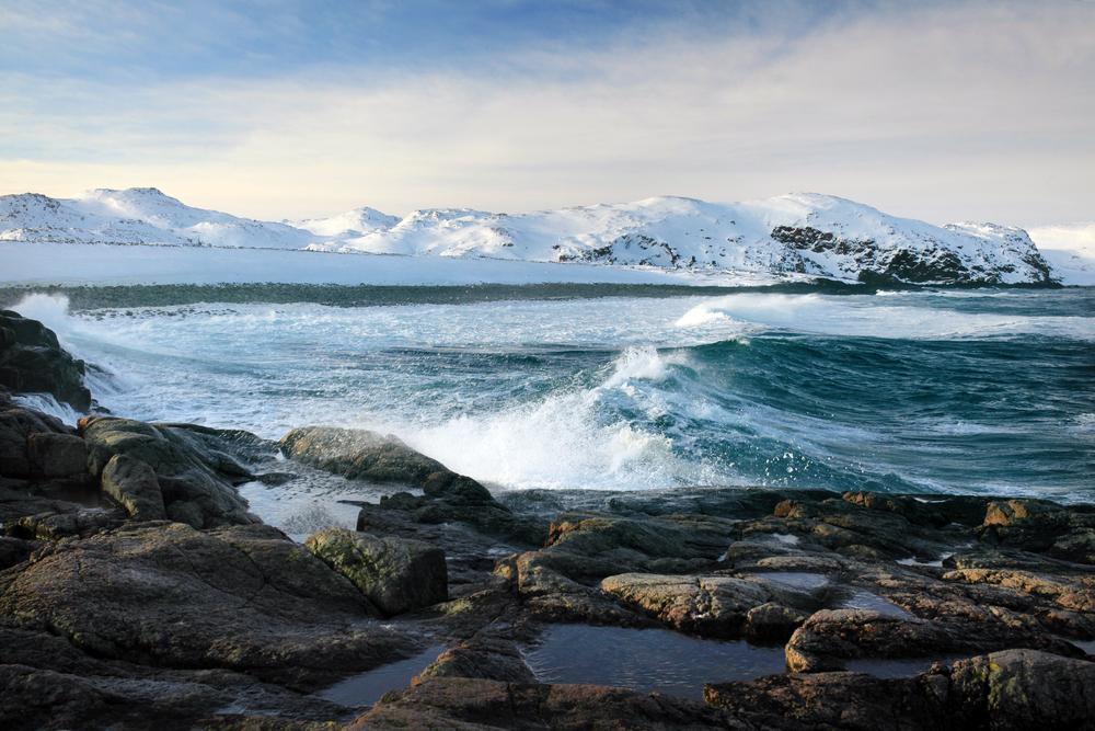 как картинки арктических заповедников листвы